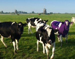 Seth Godin's Purple Cow